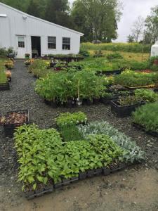 Calvert Farm