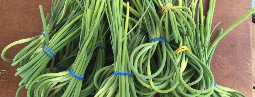scapes at Edmondson Village Farmers Market in Baltimore
