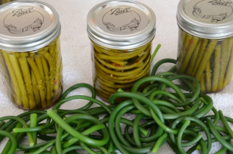 pickled-garlic-scapes-and-blanched-scapes