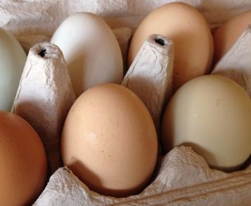 cage free farm-fresh-eggs
