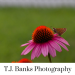 T.J. Banks Photography